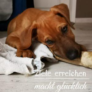 Therapiehund
